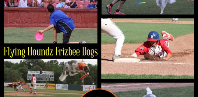 The Flying Houndz Frizbee Dogs